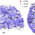 Von Hagmann P, Cammoun L, Gigandet X, Meuli R, Honey CJ, Wedeen VJ, Sporns O - Hagmann P, Cammoun L, Gigandet X, Meuli R, Honey CJ, Wedeen VJ, Sporns O (2008) Mapping the structural core of human cerebral cortex. PLoS Biology Vol. 6, No. 7, e159.[1], CC BY 3.0, $3